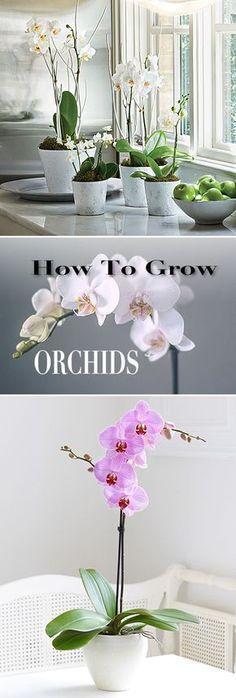How to Grow Orchids • Great tips and Ideas! - Orquídea ,  a mais cobiçada das flores ornamentais traduz a delicadeza e graciosidade, representando o amor, beleza, requinte e força.