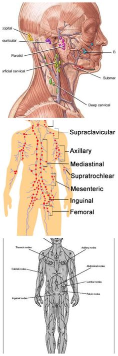 Diagram Of The Lymph Nodes Lymph Nodes In Body Diagram Human Anatomy
