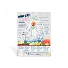 "Discover the many roles and functions water plays within the human body with the Water: The Foundation of a Healthy Body Poster. This colorful, eye-catching poster highlights water's role in the body by pointing out the location and the benefit on a chart of the human body–from head to toe.   18"" x 24"" Laminated"