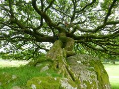 2016 Woodland Trust tree of the year shortlist -  in pictures