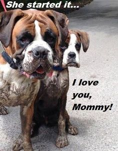 Look at those faces! #Boxer