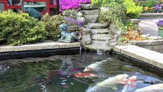 groupe de carpes koi dans leur bassin a poisson d ornement