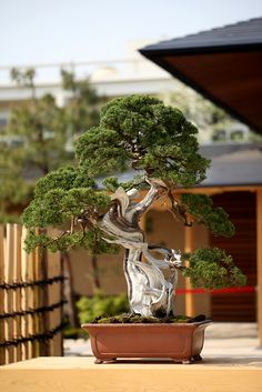 All sizes | The Omiya Bonsai Art Museum #1 | Flickr - Photo Sharing!