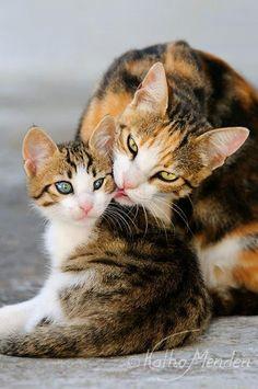 A Beautiful and Caring Mama Cat.