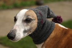 Its a whippet. In a hat. What's not to love?!