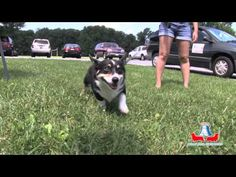 2013 Philly Area Corgi Picnic (Human Version)