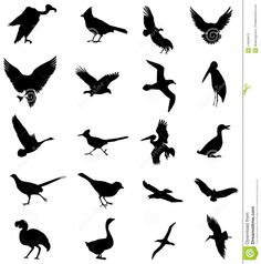 silhouettes of birds | Stylized vector silhouettes of birds.