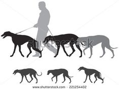 Image result for greyhound illustration