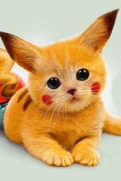 Real Pikachu Is So Cute