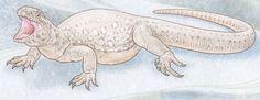 Eunotosaurus: Schildkröten-Vorfahr mit Löchern im Kopf