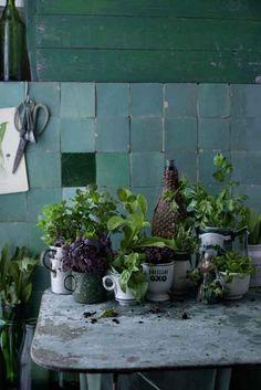 pictureperfectforyou:  (via Maria Grossmann Styling Fotografie - Food - Herbs)