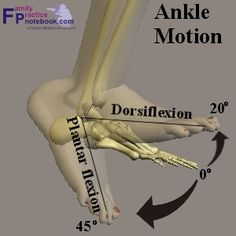 anatomy of ankle | Ankle Anatomy