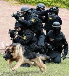 hungary sf more military dogs german shepherd dogs german shepherds . Military Working Dogs, Military Dogs, Police Dogs, War Dogs, Schaefer, German Shepherd Dogs, German Shepherds, Shepherd Puppies, Service Dogs
