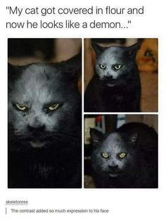 Expressions: | 27 Cats Pictures That Are Never Not Funny | That is a scary look on a cat