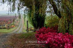 Rural Lane - Snoqualmie Valley WA