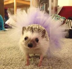 12 Craziest Tutus and The Weird People Who Wear Them - Oddee.com