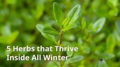 Grow Herbs Indoors: 5 Herbs that Thrive Inside Herb Gardening, Garden Plants, Planting, Freeze Zucchini, Growing Herbs Indoors, Indoor Herbs, Shredded Zucchini, Dry Well, 5 Ways