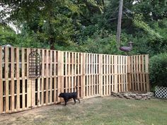 pallett yard fence | Pallet fence w/small plant hanger attached. Back yard paradise coming ...