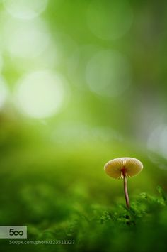 Natural UFO by donlope. Please Like http://fb.me/go4photos and Follow @go4fotos Thank You. :-)
