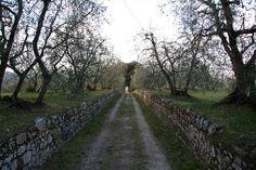 Camino by guillemborrell, via Flickr