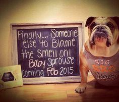 Pregnancy announcement with dog!