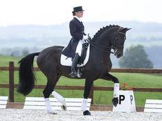 Superior Equine Sires: Equine Frozen Semen Import and Export