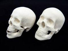 Skulls printed using print technology in UWE ceramic material on a ZCorp 510 printer. Ceramic Materials, Skull Print, Three Dimensional, Skulls, 3 D, 3d Printing, Statue, Printed, Technology