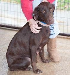 WANEETA scheduled to die without a home. Adopt. Foster. or Share. Gain a Buddy, Save a Life. #DogsInDanger