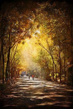 Fall in Sevilla Spain