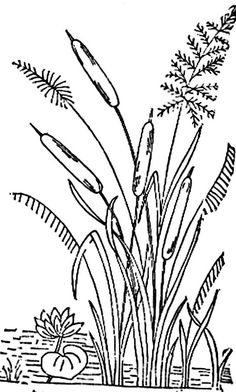 reeds and cattails Flower Art Drawing, Garden Drawing, Line Drawing, Dragonfly Art, Wood Burning Art, Plant Illustration, Traditional Paintings, Stencil Painting, Colouring Pages