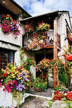 Most Design Ideas Beautiful Garden Scene Colour Flowers Plants Nature Pictures, And Inspiration – Modern House Design Beautiful Flowers, Beautiful Places, Romantic Places, The Secret Garden, Container Gardening, Planting Flowers, Flowers Garden, Flower Arrangements, Instagram
