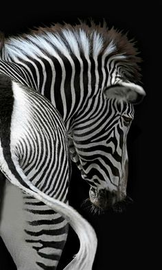 435 Best ZEBRAS images in 2019 | Zebras, Animals beautiful, Animals