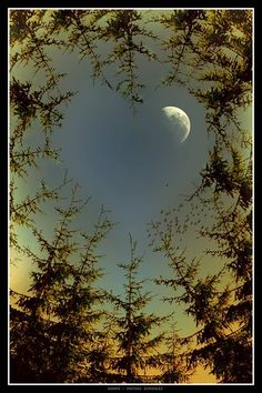 ✯ The moon through the trees. Notice the heart shape opening between the trees; awsome.