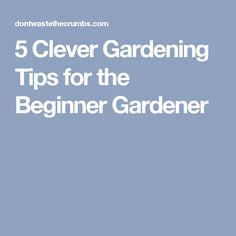 5 Clever Gardening Tips for the Beginner Gardener
