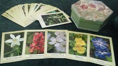 jogo Cards Belas Imagens - Florais de Bach