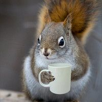 Bright Eyed & Bushy Tailed - Coffee/Tea Loving Squirrel (5x7) - How cute is this?
