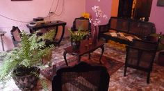 Sala de estar Cuba, Colonial, Plants, Double Bedroom, Living Room, Windows, Flora, Plant, Kobe