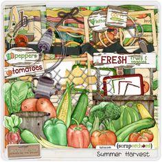Summer Harvest by mle card $6.00