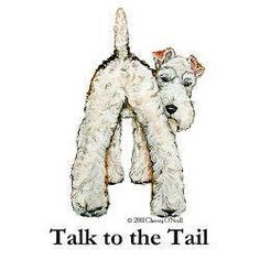 Terrier attitude...