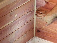Cedar Closet Part 2