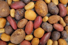 A Wonderful Article Covering Potatoes, Buying and Choosing, Ways of Storing, All Methods Of Cooking Them, And Varieties, Plus Much More // You may need to use google chrome translator --