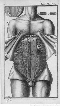 [Illustrations de Anatomie chirurgicale] / [Non identifié] ; J. Palfin. Éditeur : La veuve Cavelier et fils (Paris), 1753. Tom. II. P. 32. Pl. II. Muscles de l'abdomen.