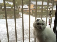 Yuki doesn't appear impressed with the weather