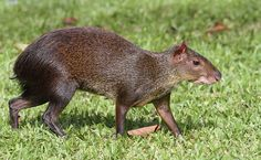 What are Some Animals Without Tails? This is 7 Types of Dogs Without Tail - Cabrito All Animals Pictures, List Of Animals, Animals Of The World, Farm Animals, Unusual Animals, Animals Beautiful, Small Animals, Wild Creatures, Strange Creatures
