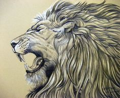 "11"" X 14"" Pencil Drawing on Oatmeal Canson Scrapbook Paper of a very unhappy lion based on the photograph taken by the adventurous, and traveling *Sooper-Deviant who so graciously allows artists to..."