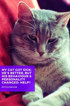 Roughly a week ago, a new reader, Rooksaar, stumbled across my blog while digging for information about behavioural changes in cats, and in particular, about personality changes that occur after illnesses. Her newly adopted shelter cat had taken ill with an upper respiratory infection almost immediately after being taken home, and on his … Kittens Cutest, Cats And Kittens, Cat Behavior Problems, Cat Tree Condo, Outdoor Cats, Pet Care Tips, Cat Facts, Cat Grooming, Cat Life