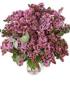 Un buchet cu liliac este un cadou încântător! Fă-i cuiva drag ziua parfumată şi colorată cu ajutorul superbelor flori de liliac! Este cel mai potrivit buchet pentru această perioadă din an. Cu siguranţă vei stârni emoție. Trimite buchetul la domiciliu prin intermediul serviciului nostru de livrare flori şi surpriza va fi una specială. #lilacs #liliac Magnolia, Iris, Floral Wreath, Wreaths, Decor, Floral Crown, Decoration, Door Wreaths, Magnolias