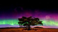 The Solitary Tree & Auroras, Estonia