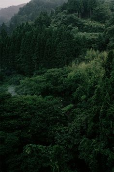 green, nature, and forest afbeelding Beautiful World, Beautiful Places, Beautiful Forest, Slytherin Aesthetic, Ex Machina, Deep Forest, All Nature, Green Nature, Land Scape