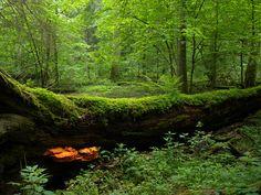 Białowieża National Park, Poland photographed by Frank Vassen